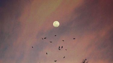 volle maan met roze lucht