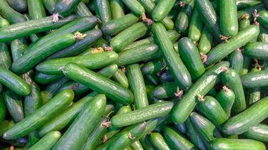 Deze komkommers zijn gezond