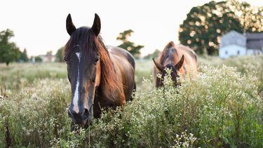 Paarden hoogsensitief