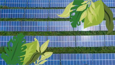zonnepanelen in veld