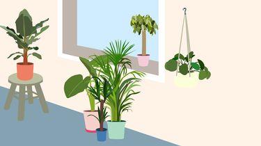 planten luchtzuiverende werking