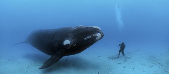 Walvis en duiker