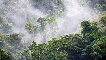 regenwoud met wolk