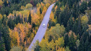 bus rijdt door gekleurd bos
