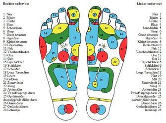 voetreflex-zones