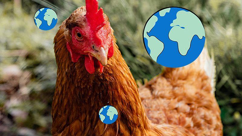 vlees dat uitstoot
