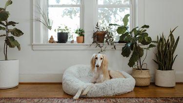 hond in woonkamer met planten om zichheen