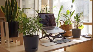 thuiswerken tussen de planten