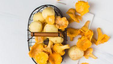 medicinale mushrooms in een bakje