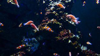 vissen in oceaan
