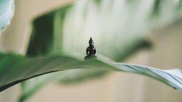 buddha in yoga pose