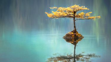 boom in een vijfer