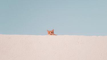 kat boven een muur