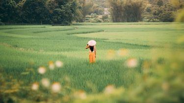 vrouw in een rijstveld