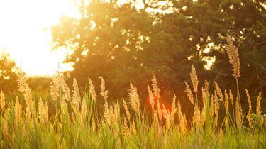 zomerse weide met zon