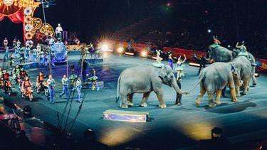 olifanten in cirsus