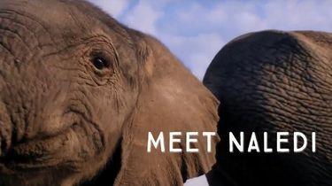Afbeelding van docu Naledi op Netflix