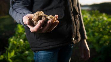 biologische landbouw groei