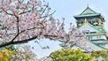 Bloesem in een klimaatneutraal japan