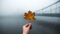 Optimisme tijdens herfstdip