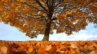 Duurzame begrafenis via een eenwording met deze grote boom