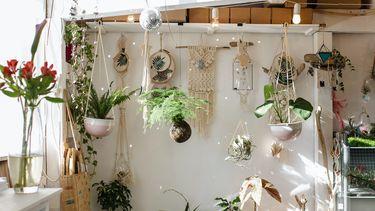 Kamer met planten