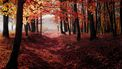 herfstbladeren aan bomen
