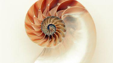 heilige geometrie schelp