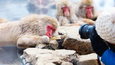 aapjes voor Camera
